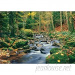 Brewster Home Fashions Ideal Decor Forest Stream Wall Mural BZH2081