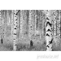 WallPops! Komar Birch Forest 145 x 98 Wall Mural WPP1514