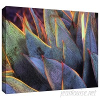 ArtWall 'Sun Succulent' by Dean Uhlinger Photographic Print on Wrapped Canvas ARWL4683