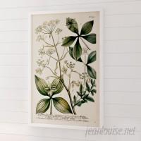 August Grove 'Herbs' Framed Graphic Art ATGR2535