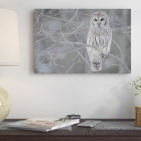 East Urban Home 'Barred Owl on Branches' Photographic Print ESRB6954